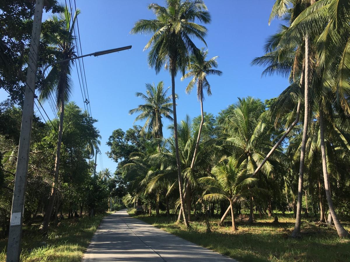 Welcome to Koh Samui & KohPhangan!